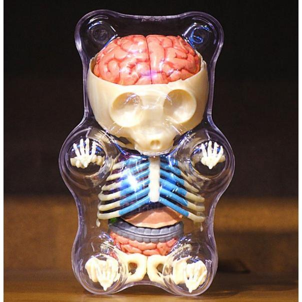 Gummy Bear Anatomy Model