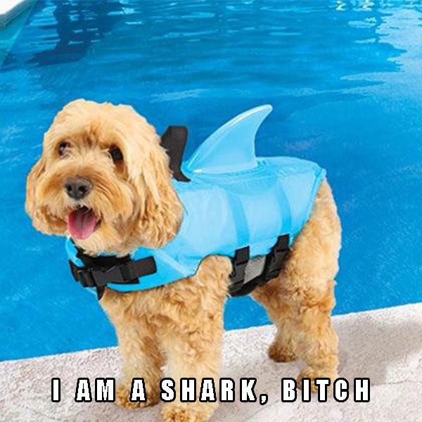 Shark Fin Doggie Swim Vest