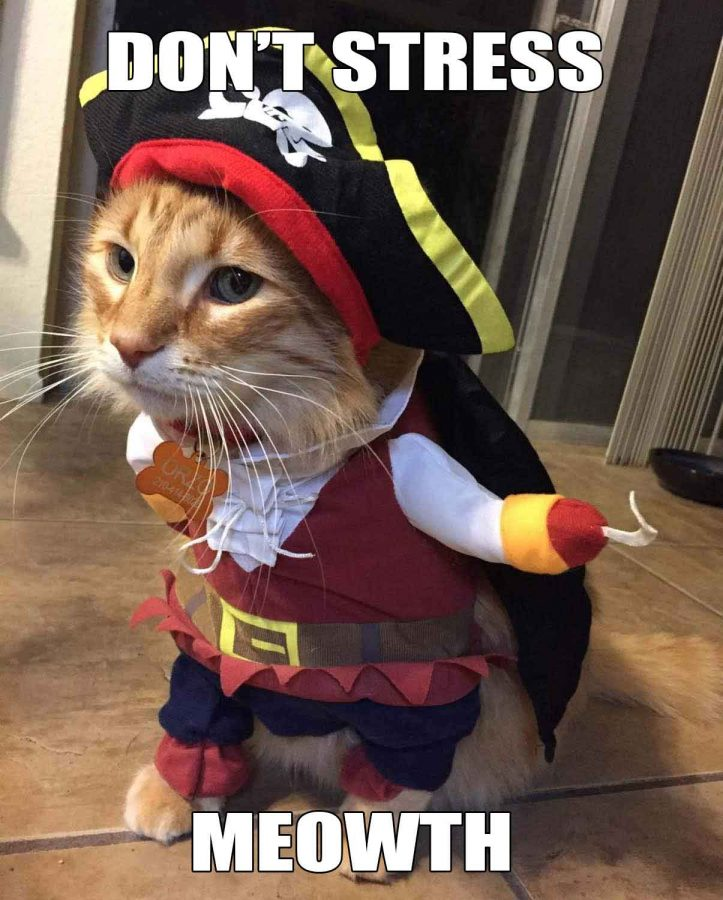 c5743080ef7 Cat Pirate Costume - Funny Cat Costume - Geeky Gift Ideas
